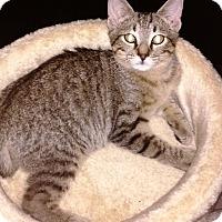 Adopt A Pet :: Holly - Seminole, FL