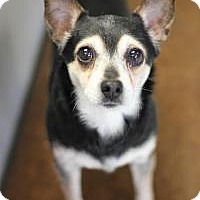 Adopt A Pet :: Gustov - Yukon, OK