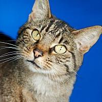 Adopt A Pet :: Kai - Coronado, CA
