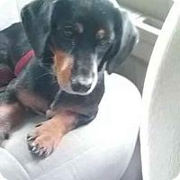 Adopt A Pet :: Little Girl - Osteen, FL
