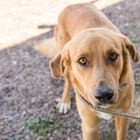 Adopt A Pet :: Donny - Alpine, TX