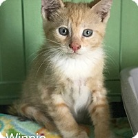 Adopt A Pet :: Winne - Island Park, NY