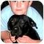 Photo 3 - Labrador Retriever Dog for adoption in Pawling, New York - GUNNER