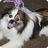 Adopt A Pet :: Lucky - Westfield, IN