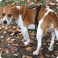 Adopt A Pet :: Dakota-2 - Portland, OR