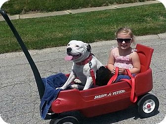 Labrador Retriever Mix Dog for adoption in Lewisville, Indiana - Emma