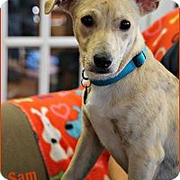 Adopt A Pet :: Sam - Marietta, GA