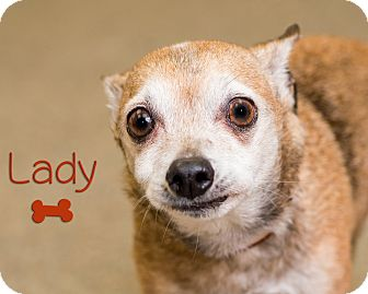 Chihuahua Mix Dog for adoption in Somerset, Pennsylvania - Lady
