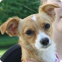 Adopt A Pet :: Bordentown NJ - Ginger - New Jersey, NJ