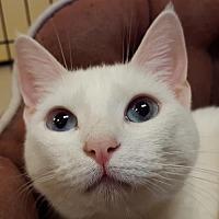 Adopt A Pet :: Hilo - Auburn, CA