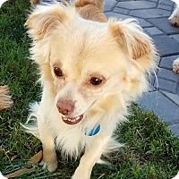 Adopt A Pet :: Sandy - Antioch, CA