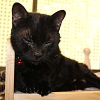 Adopt A Pet :: Purdy - Boca Raton, FL