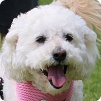 Adopt A Pet :: Whitney - La Costa, CA