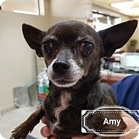 Adopt A Pet :: Amy - Las Vegas, NV