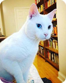 Domestic Shorthair Cat for adoption in Philadelphia, Pennsylvania - Millburn
