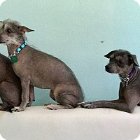 Adopt A Pet :: Rosie/Violet/Bluebell - San Francisco, CA