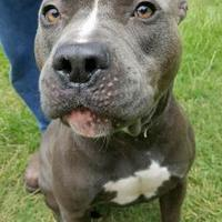 Adopt A Pet :: Thor - Moultrie, GA