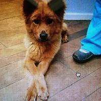 Adopt A Pet :: Annie - Billerica, MA