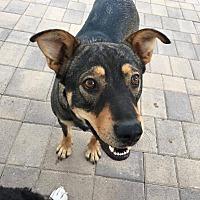Adopt A Pet :: Mai Tai - Rosamond, CA