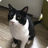 Adopt A Pet :: Merlot - Toronto, ON