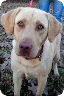 Labrador Retriever Mix Dog for adoption in Peachtree City, Georgia - Marley