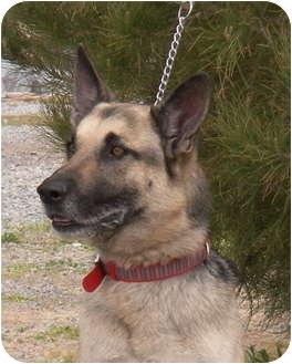 German Shepherd Dog Dog for adoption in Las Vegas, Nevada - Nibbles