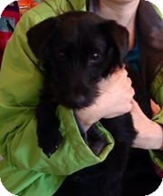 Terrier (Unknown Type, Small) Mix Dog for adoption in LaGrange, Kentucky - PRIMROSE