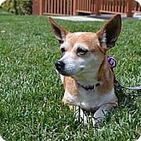 Adopt A Pet :: June Bug - Los Angeles, CA
