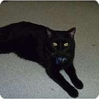 Adopt A Pet :: Duke - Hamburg, NY