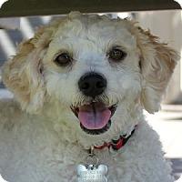 Adopt A Pet :: Sheri - La Costa, CA