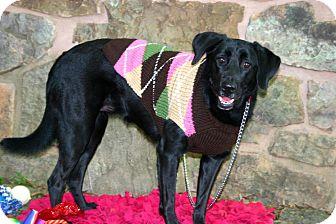 Border Collie Mix Dog for adoption in Muldrow, Oklahoma - Amelia