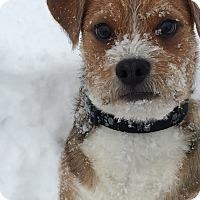 Adopt A Pet :: TIMOTHY - Salt Lake City, UT