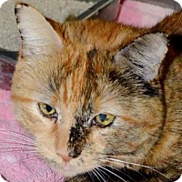Adopt A Pet :: Zydeco - Winchester, CA