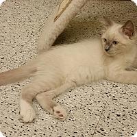 Adopt A Pet :: Jasper - Phoenix, AZ