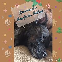 Adopt A Pet :: Issac Newton - Reno, NV