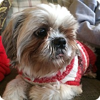 Adopt A Pet :: Bailey - Raritan, NJ