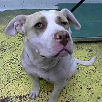Adopt A Pet :: GOLDEN EYE - Atlanta, GA