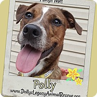 Adopt A Pet :: POLLY - Lincoln, NE