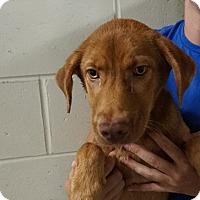 Adopt A Pet :: Daytona - Oviedo, FL