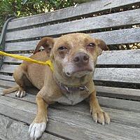 Adopt A Pet :: MILES - Porterville, CA