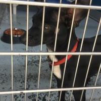 Adopt A Pet :: ROSE - Kiln, MS