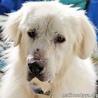 Adopt A Pet :: Rumpole - new! - Beacon, NY