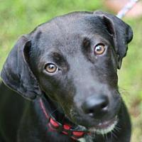 Adopt A Pet :: Toby - Danbury, CT