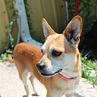 Adopt A Pet :: Penelope - Muskegon, MI
