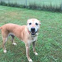 Adopt A Pet :: Ruthy - Avon, OH