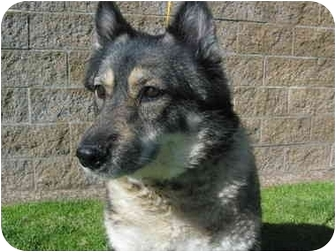 Husky Mix Dog for adoption in El Cajon, California - Samantha