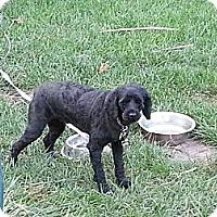 Adopt A Pet :: widget - Cincinnati, OH