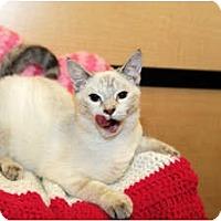 Adopt A Pet :: Alusia - Farmingdale, NY