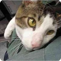Adopt A Pet :: Houdini - Staten Island, NY