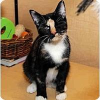 Adopt A Pet :: Glinda - Farmingdale, NY